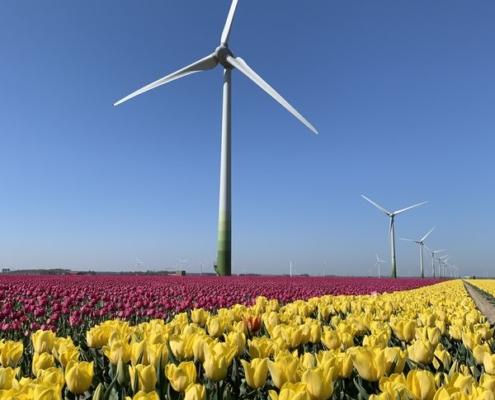 22 april 2020; Tulpen